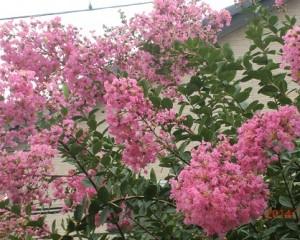 ヒラヒラと波打つ形の花びら