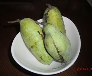 ポポの実。南国フルーツのような甘い匂い。