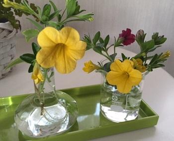 切った花は部分は部屋で楽しみます